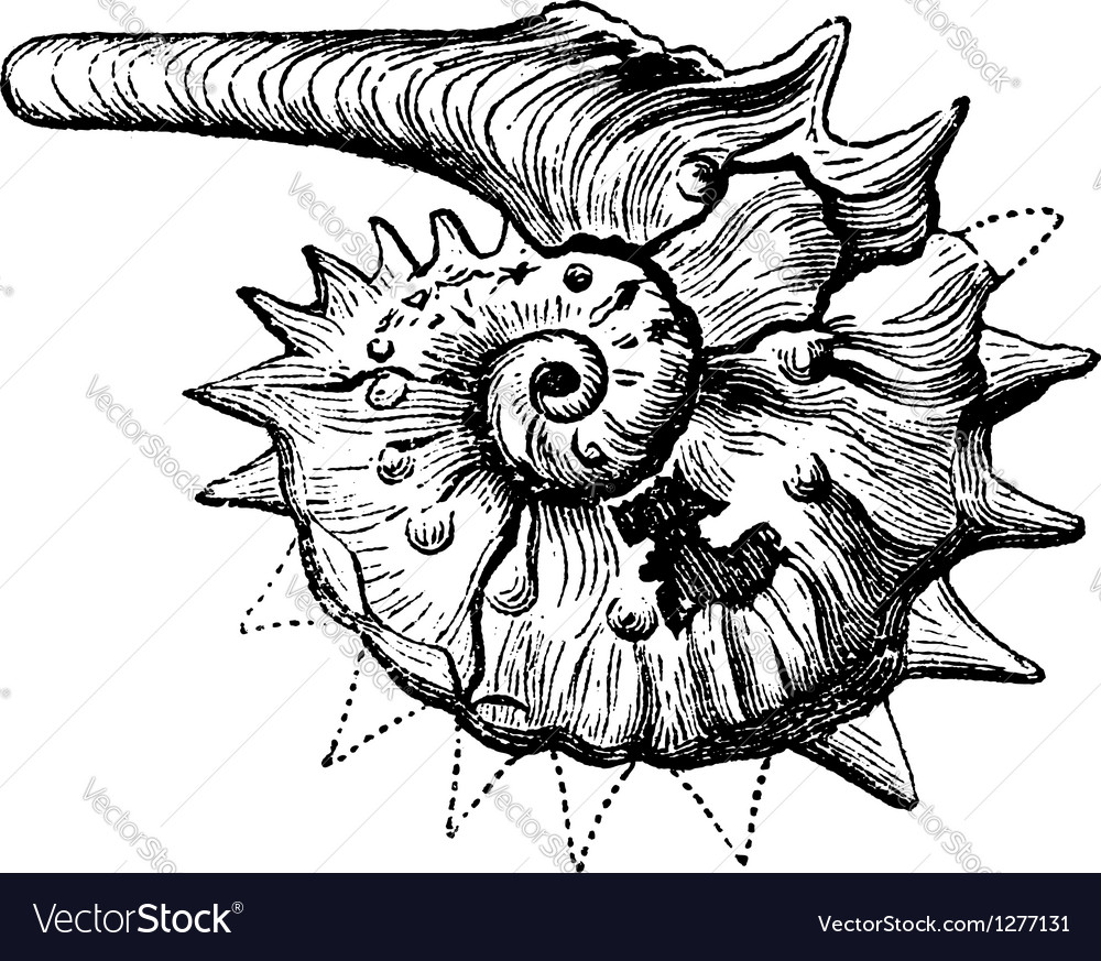 Ammonite fossil vintage engraving vector | Price: 1 Credit (USD $1)