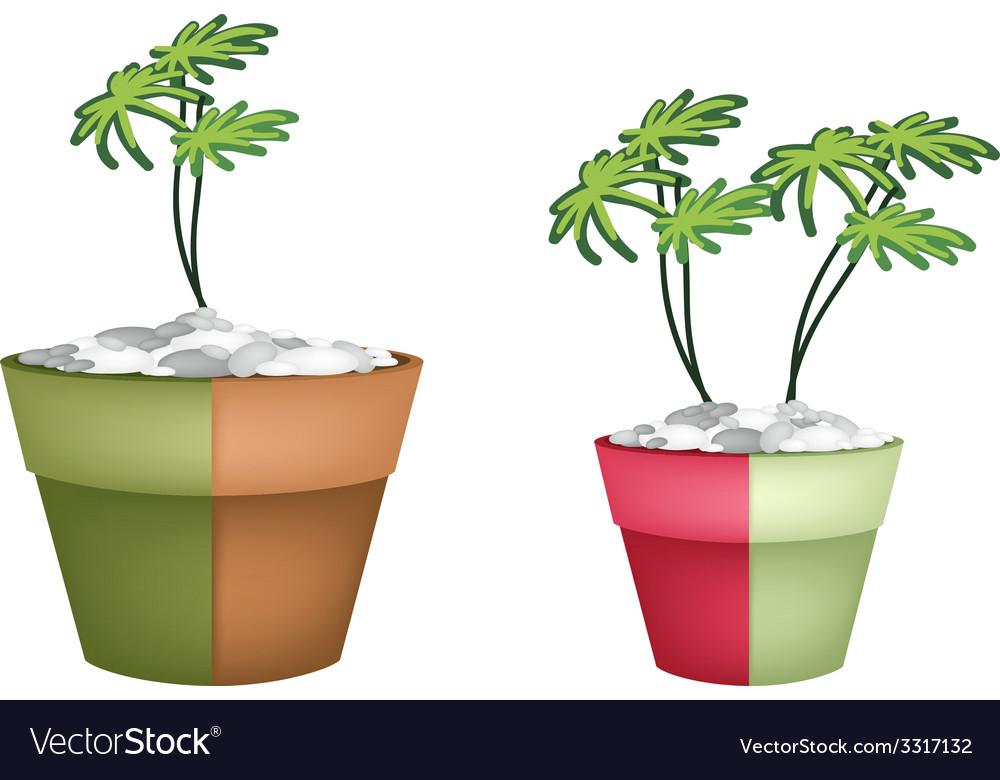 Two evergreen plant in ceramic pots vector | Price: 1 Credit (USD $1)