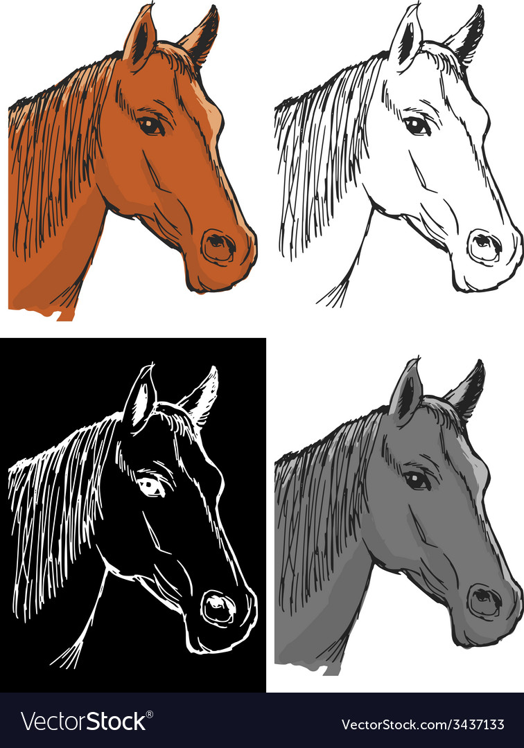 Bay horse vector | Price: 1 Credit (USD $1)