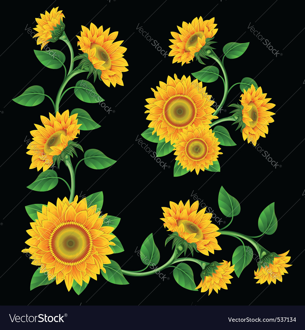 Yellow sunflowers on the black background design e vector | Price: 1 Credit (USD $1)