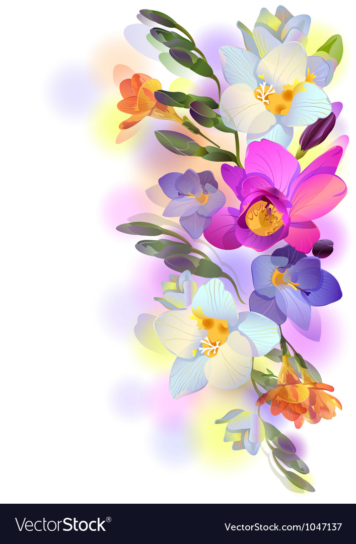 Background with gentle freesia flowers and vector | Price: 1 Credit (USD $1)