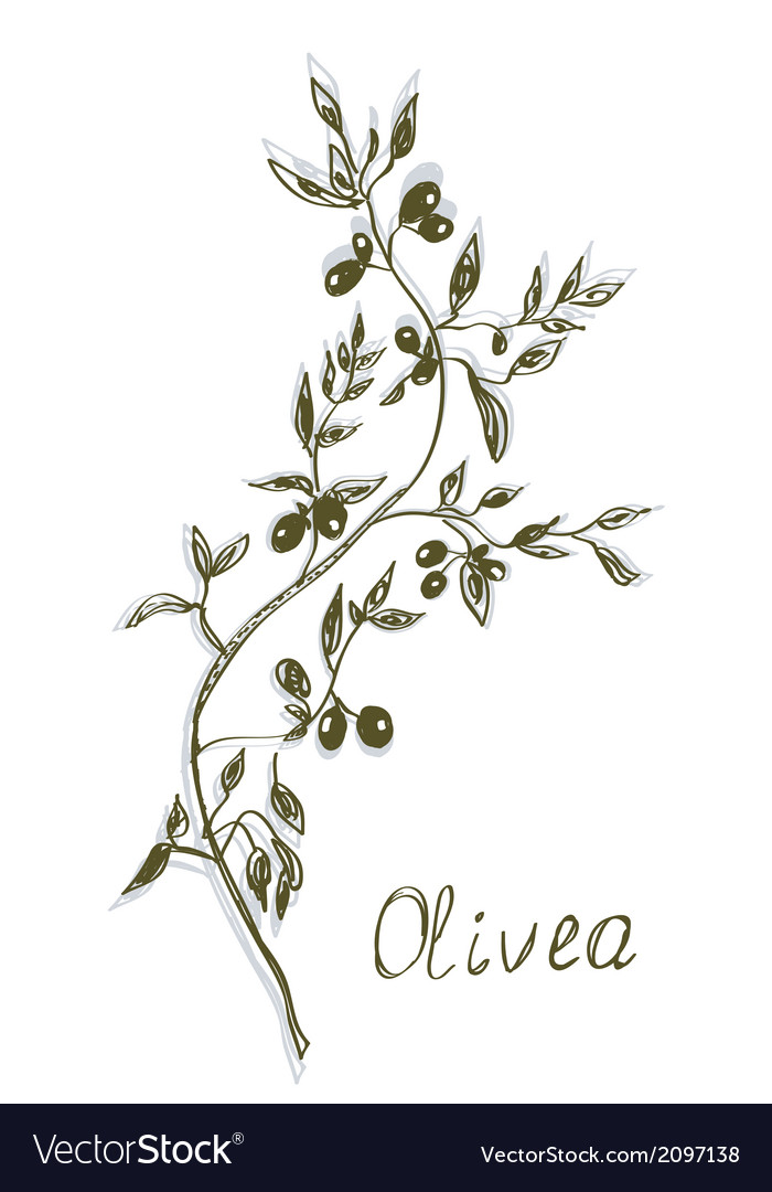 Olive branch painting hand drawn vector | Price: 1 Credit (USD $1)