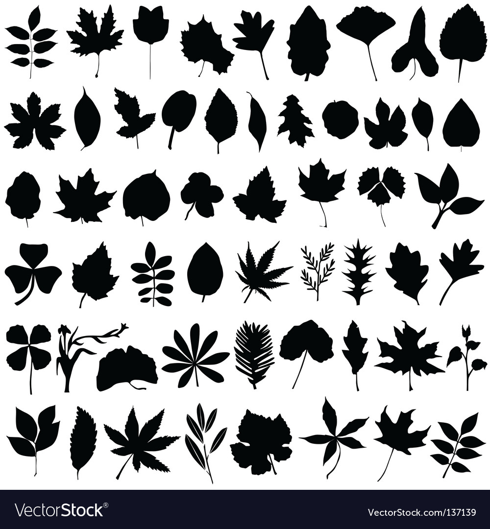 Floral and leaf vector | Price: 1 Credit (USD $1)
