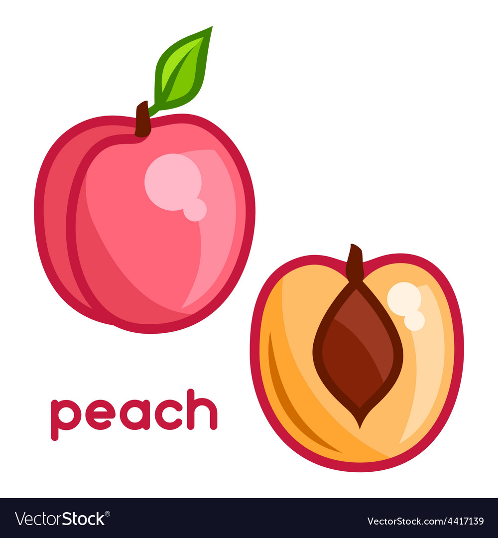 Stylized of fresh peach on white vector   Price: 1 Credit (USD $1)