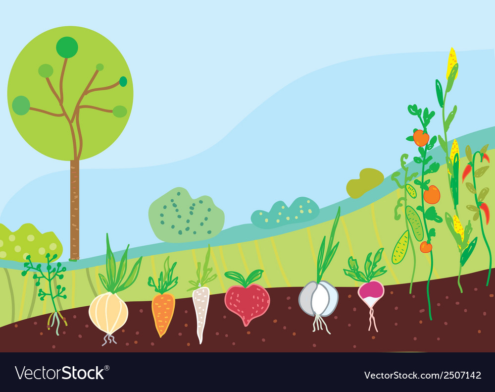 Garden in spring with vegetables vector | Price: 1 Credit (USD $1)