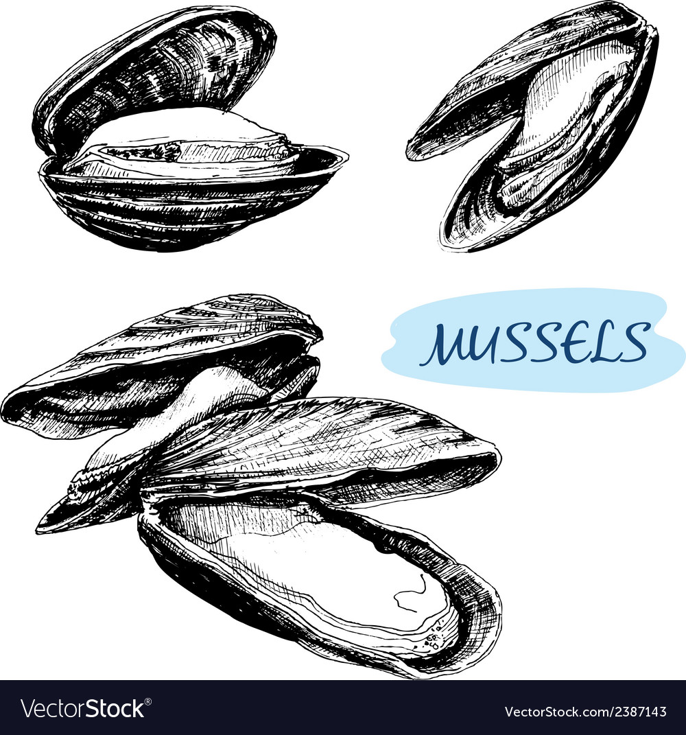 Mussels vector | Price: 1 Credit (USD $1)