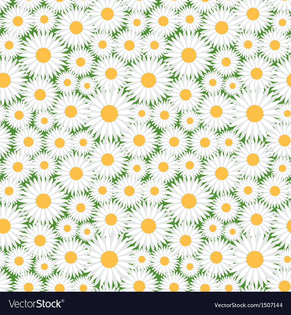 Camomile pattern vector | Price: 1 Credit (USD $1)