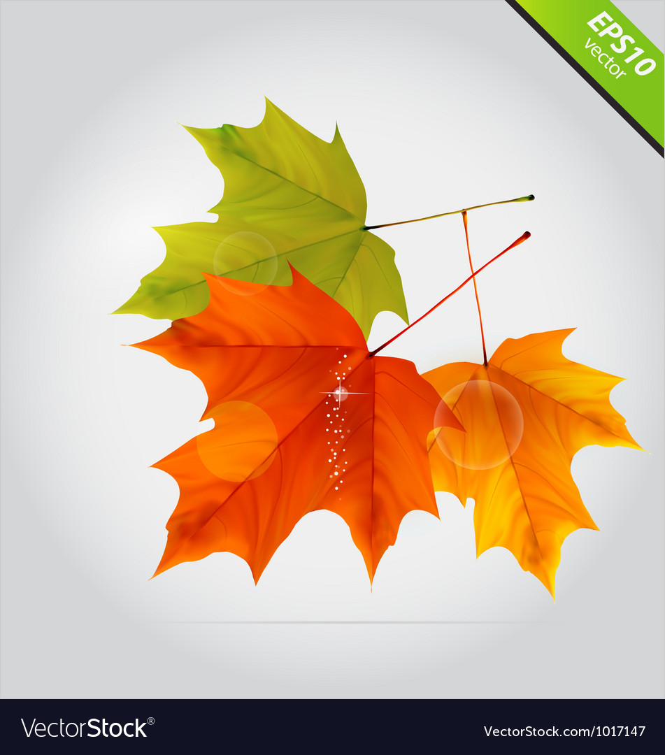 Abstract nature leafs autumn symbol october vector | Price: 1 Credit (USD $1)