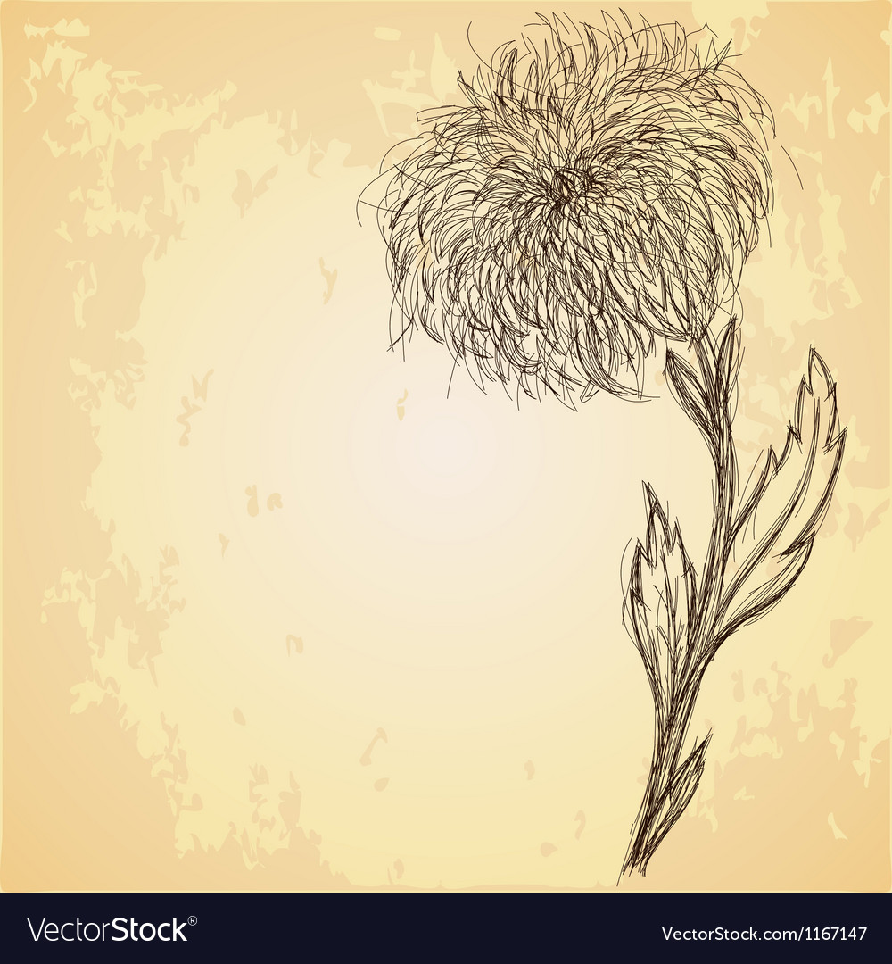 Sketch of chrysanthemum flower on grungy texture vector | Price: 1 Credit (USD $1)