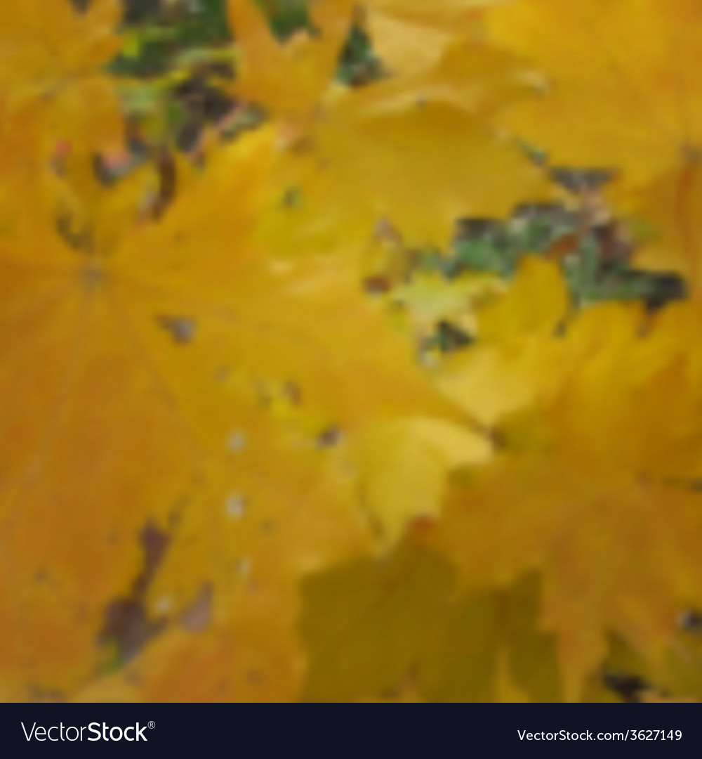 Autumn maple blurred photo background image vector | Price: 1 Credit (USD $1)