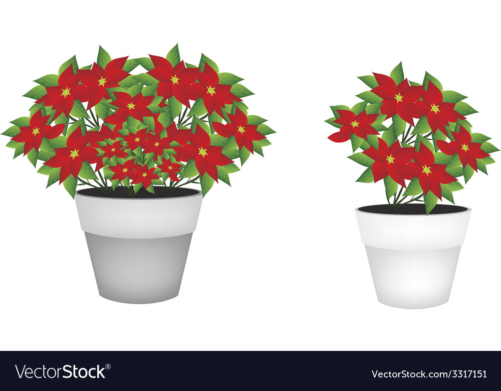 Exotic red poinsettia flower in flower pot vector | Price: 1 Credit (USD $1)