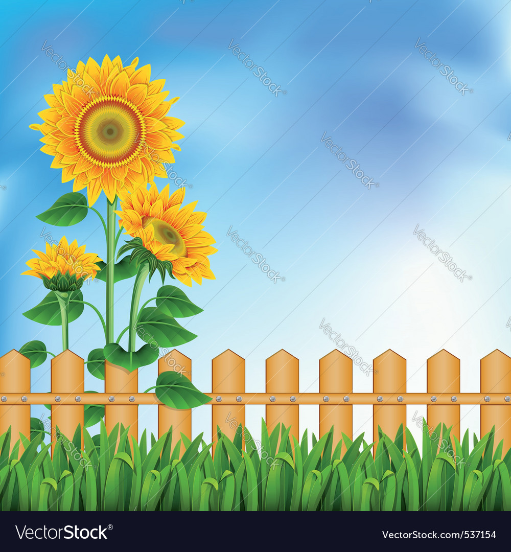 Background with a field of sunflowers and blue sky vector | Price: 1 Credit (USD $1)