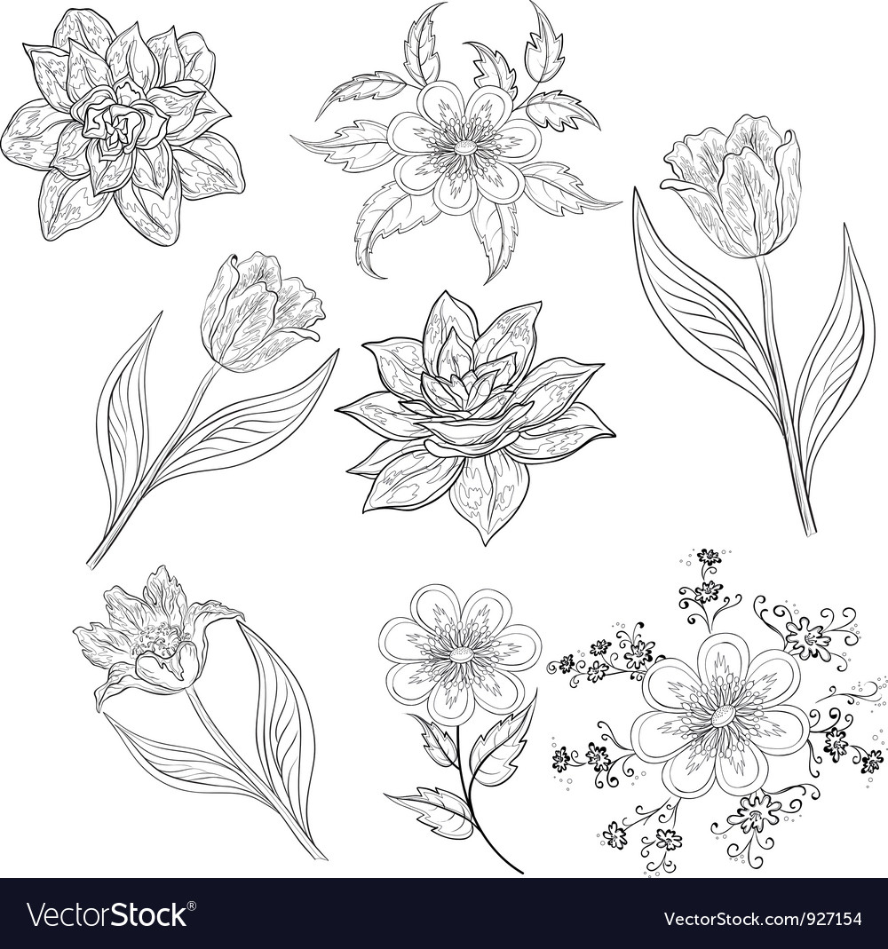 Flowers set outline vector | Price: 1 Credit (USD $1)