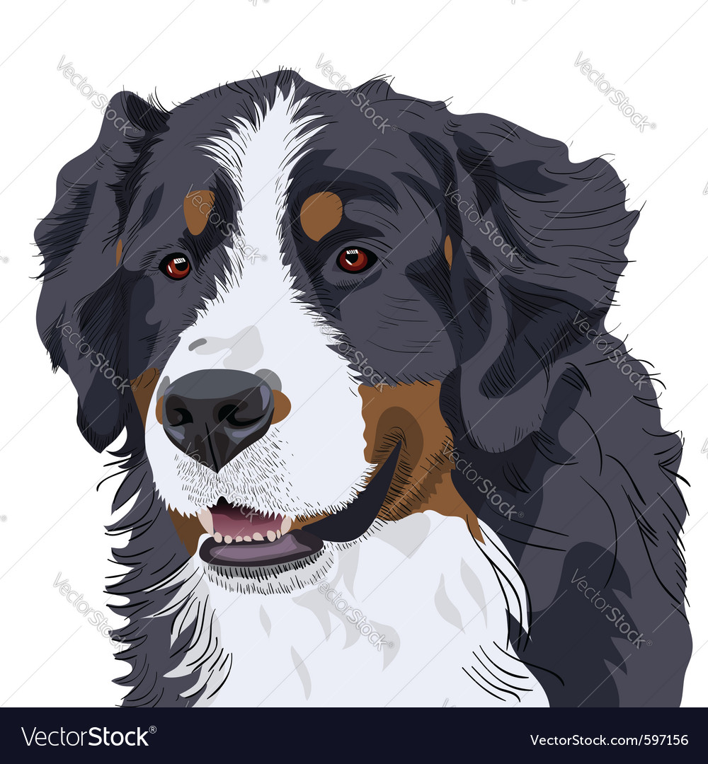 Bernese mountain dog vector | Price: 3 Credit (USD $3)