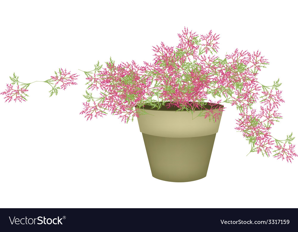 A pink flowering plants in flower pot vector | Price: 1 Credit (USD $1)