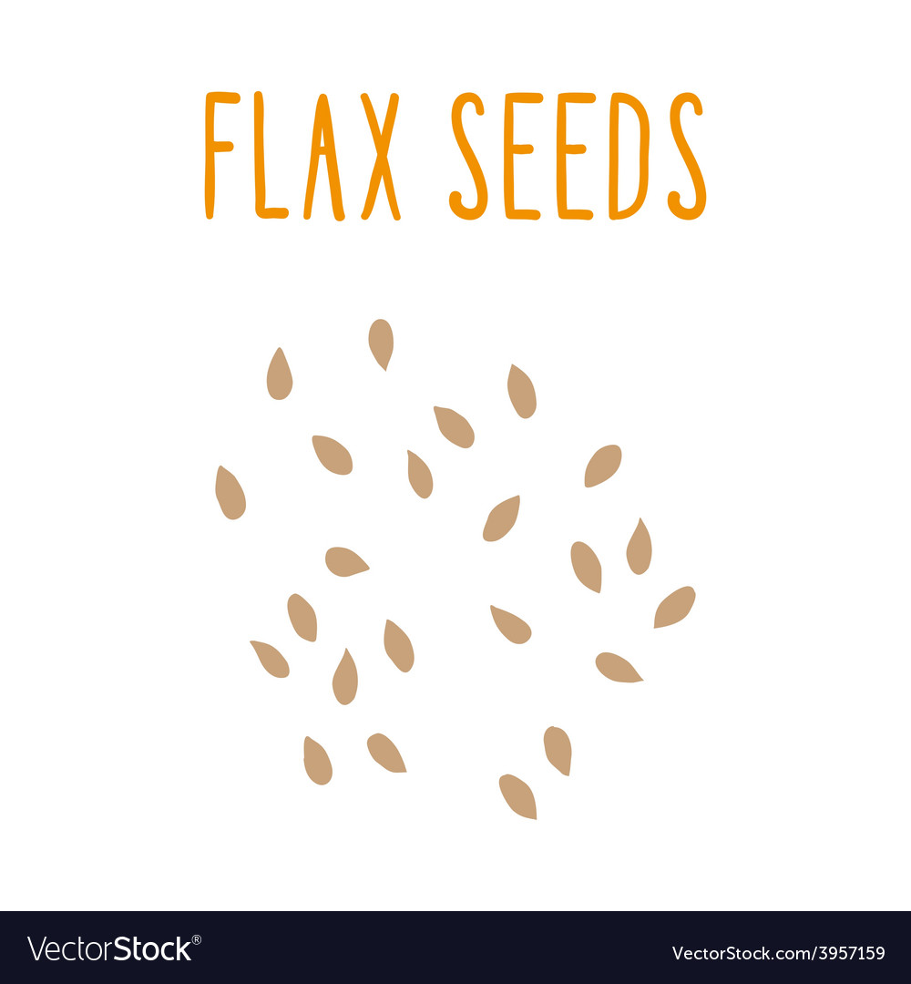 Flax seeds vector   Price: 1 Credit (USD $1)
