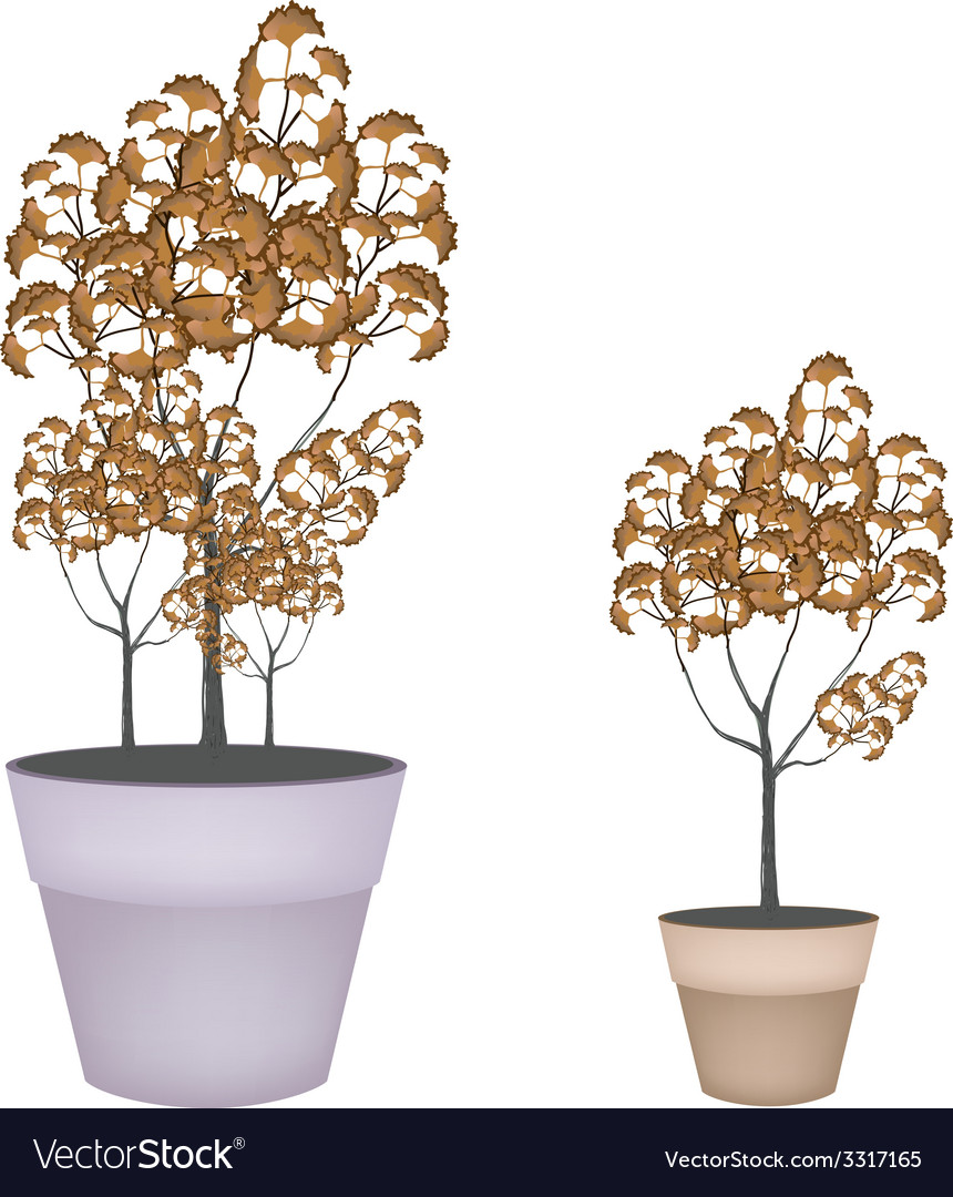 Abstract isometric of trees in flower pot vector | Price: 1 Credit (USD $1)