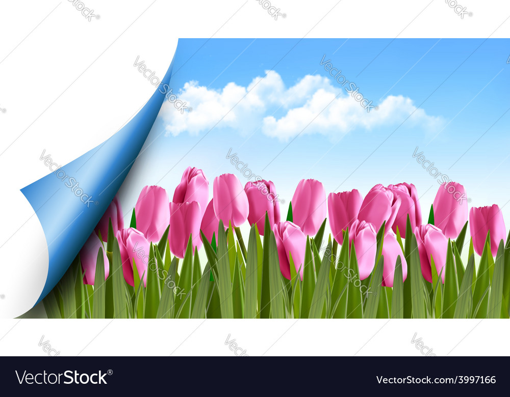 Spring background with pink tulips and a page vector | Price: 1 Credit (USD $1)
