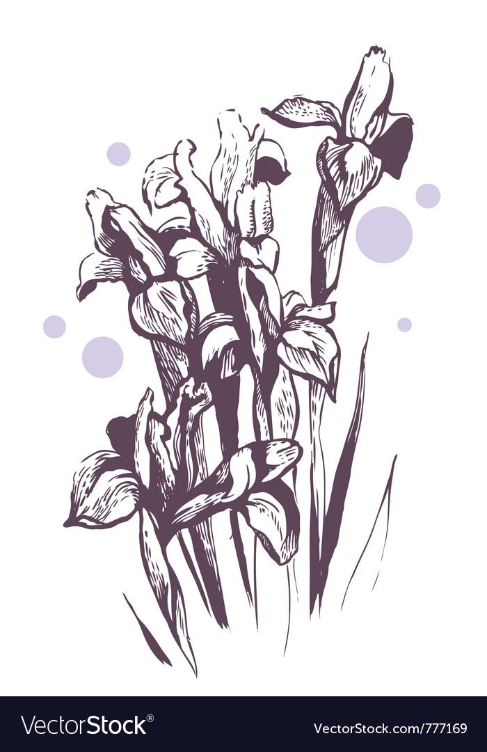 Iris flowers hand-drawn vector | Price: 1 Credit (USD $1)