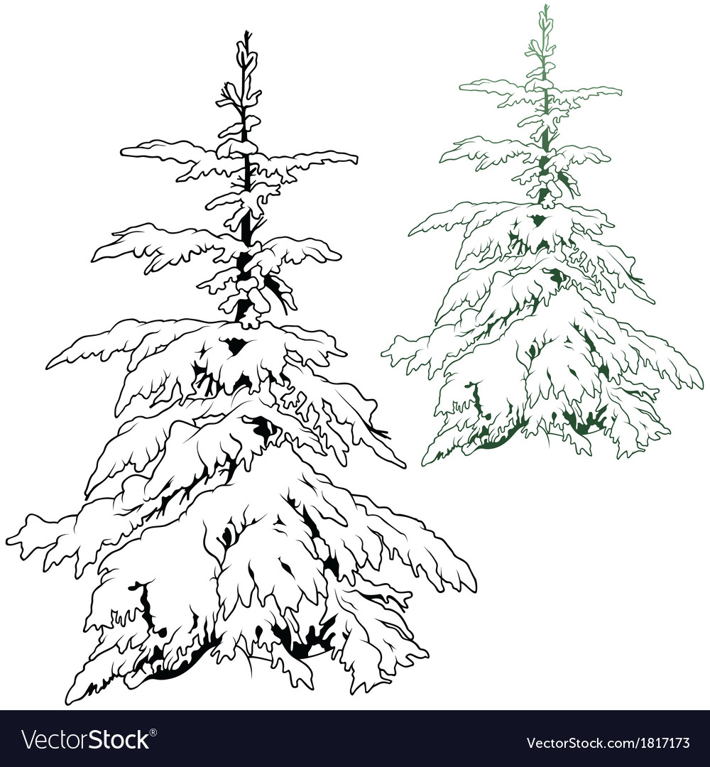 Snowy conifer vector | Price: 1 Credit (USD $1)