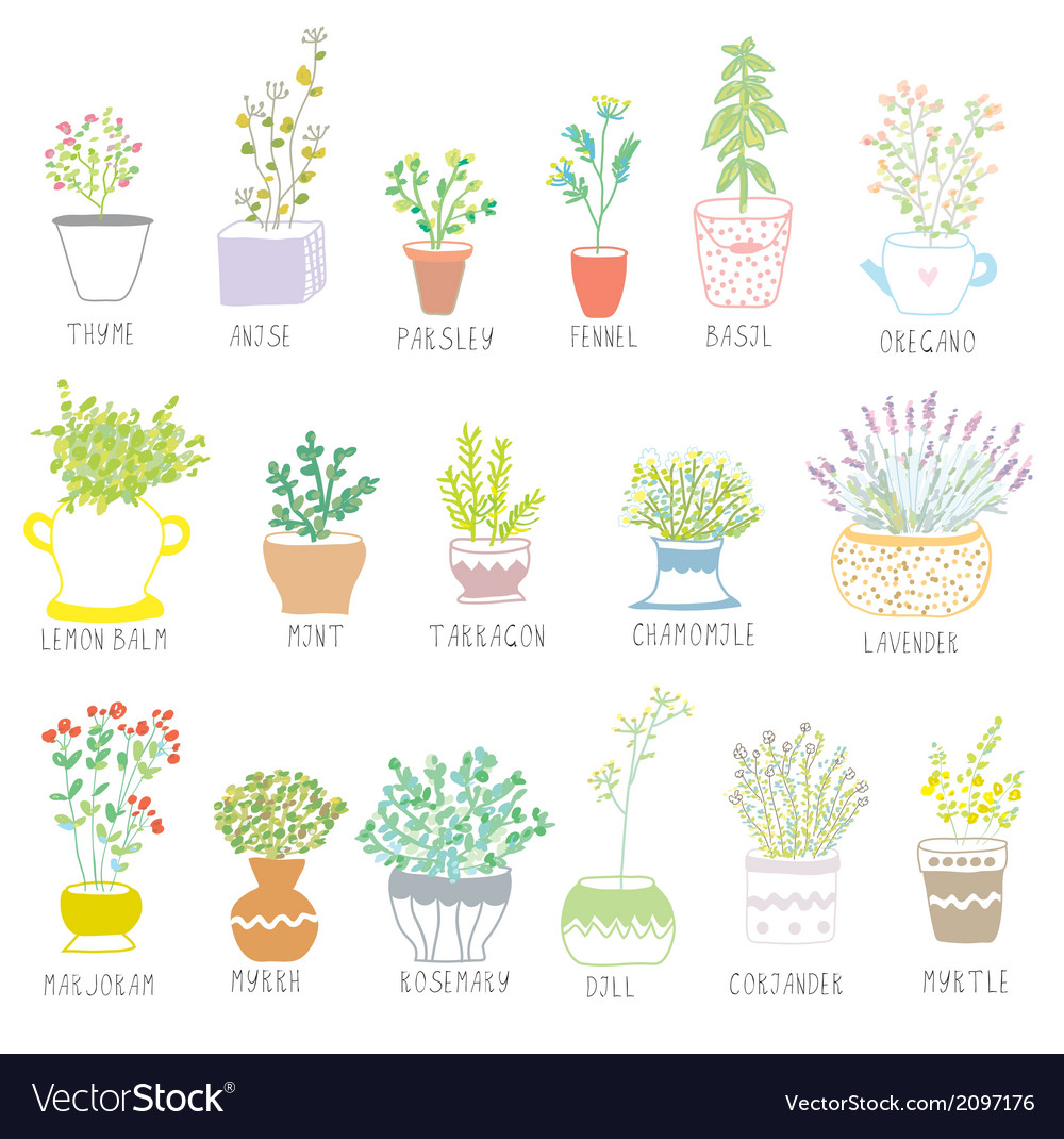 Herbs and spices set in pots with flowers vector | Price: 1 Credit (USD $1)
