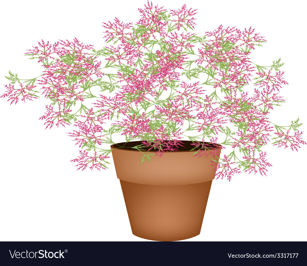 A lovely pink flowering plants in flower pot vector | Price: 1 Credit (USD $1)