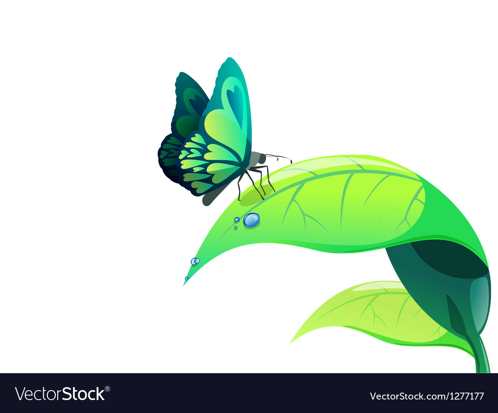 Butterfly on leaf vector | Price: 3 Credit (USD $3)