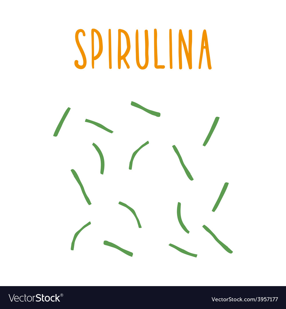 Spirulina vector | Price: 1 Credit (USD $1)