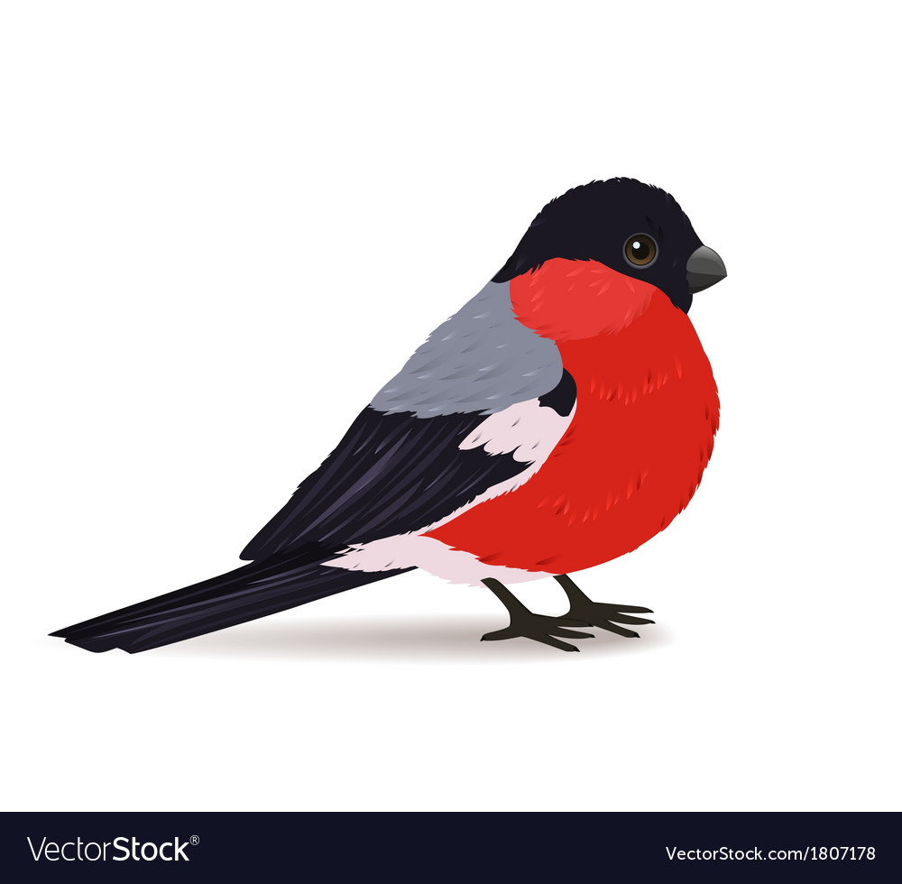 Winter bullfinch bird vector | Price: 1 Credit (USD $1)