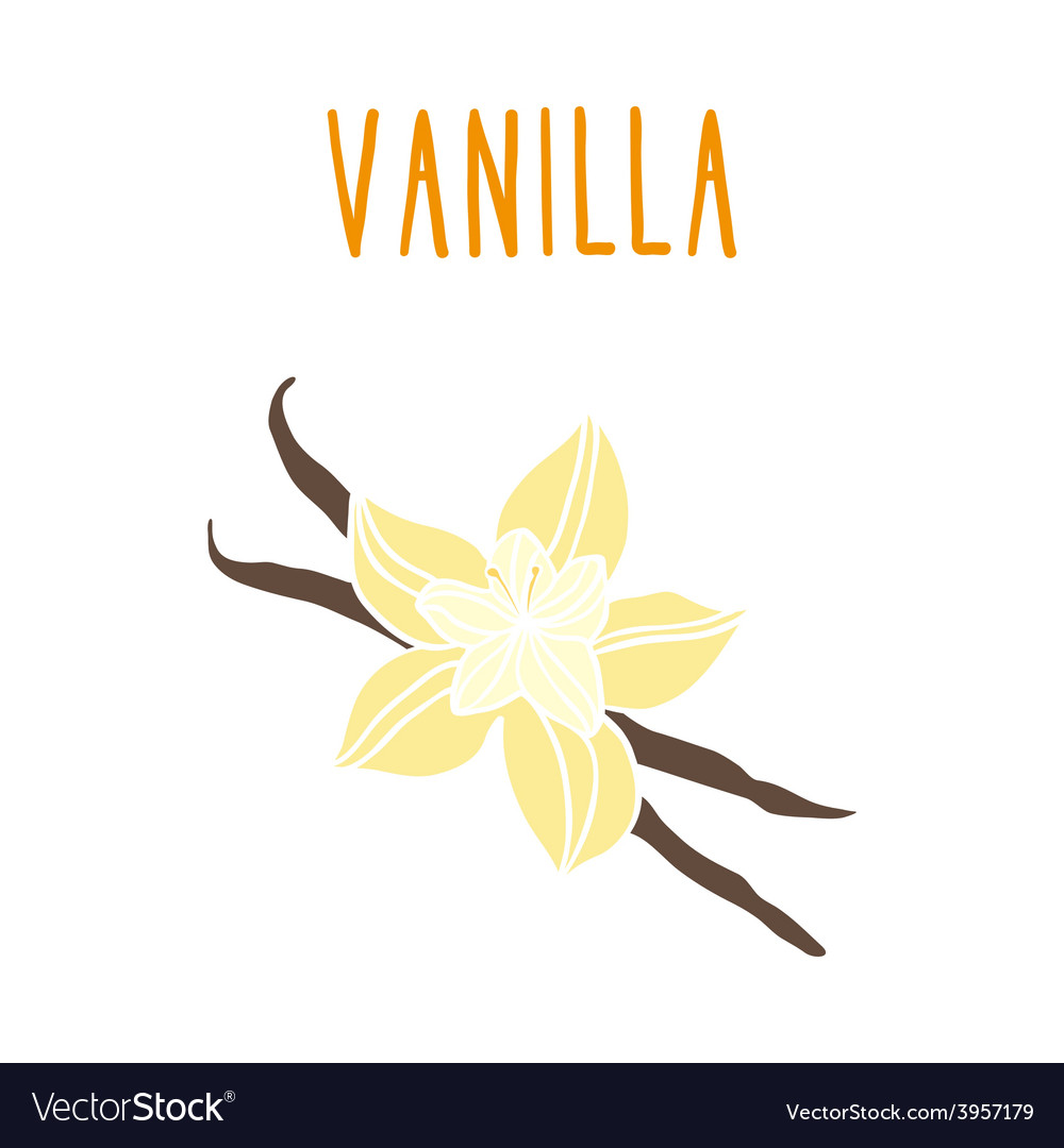 Vanilla beans vector | Price: 1 Credit (USD $1)