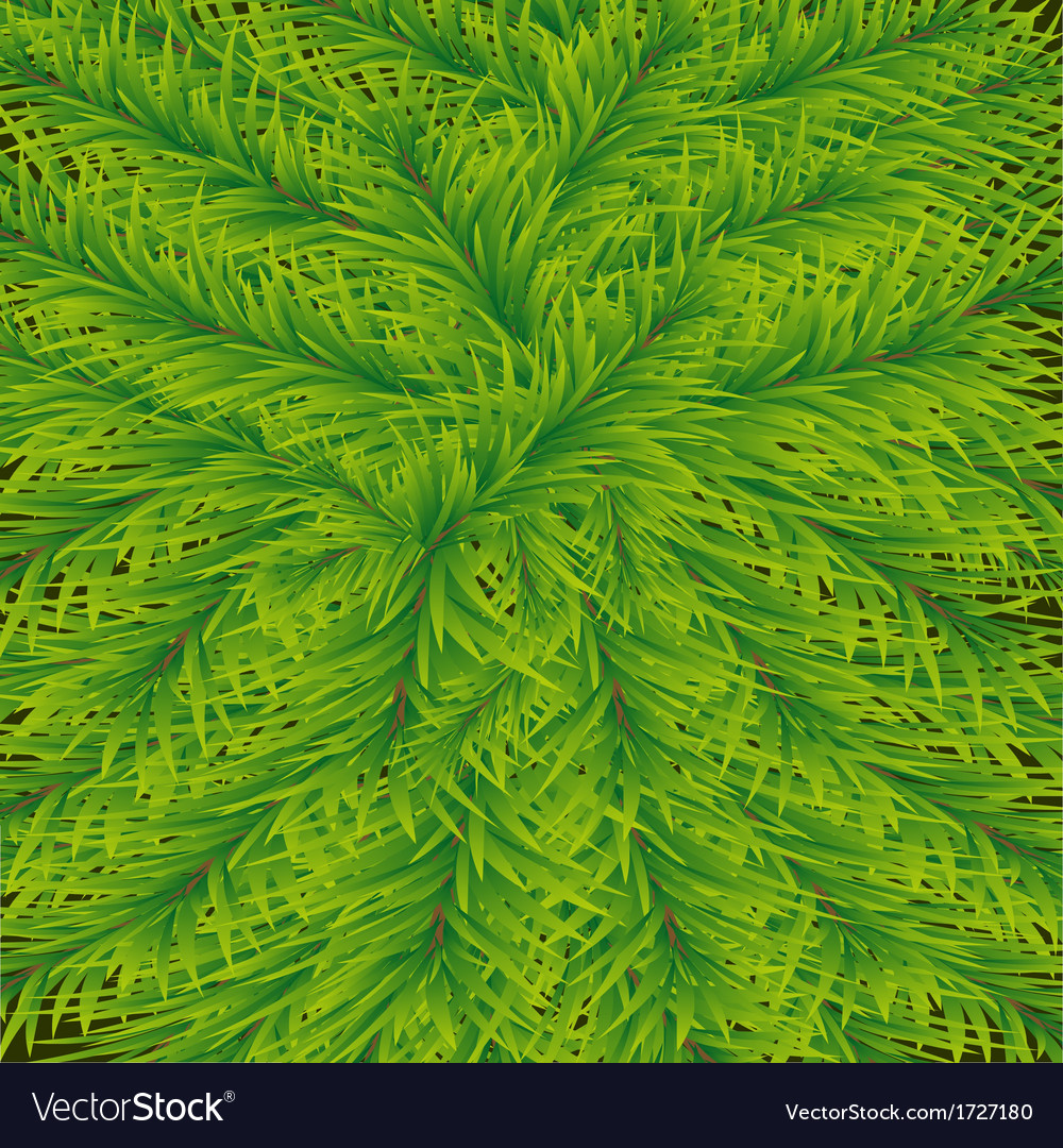 Background of fir vector | Price: 1 Credit (USD $1)