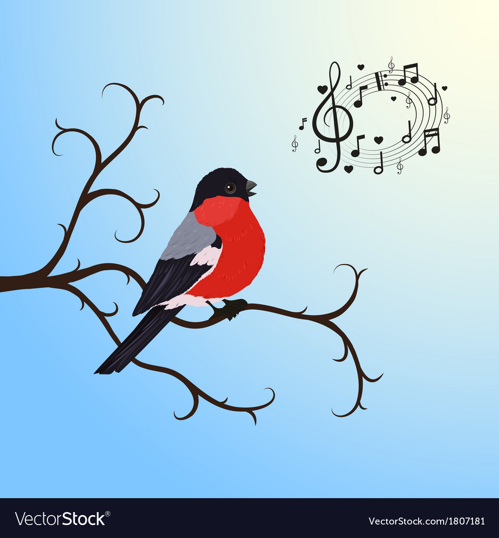 Singing bullfinch bird on a tree branch vector | Price: 1 Credit (USD $1)