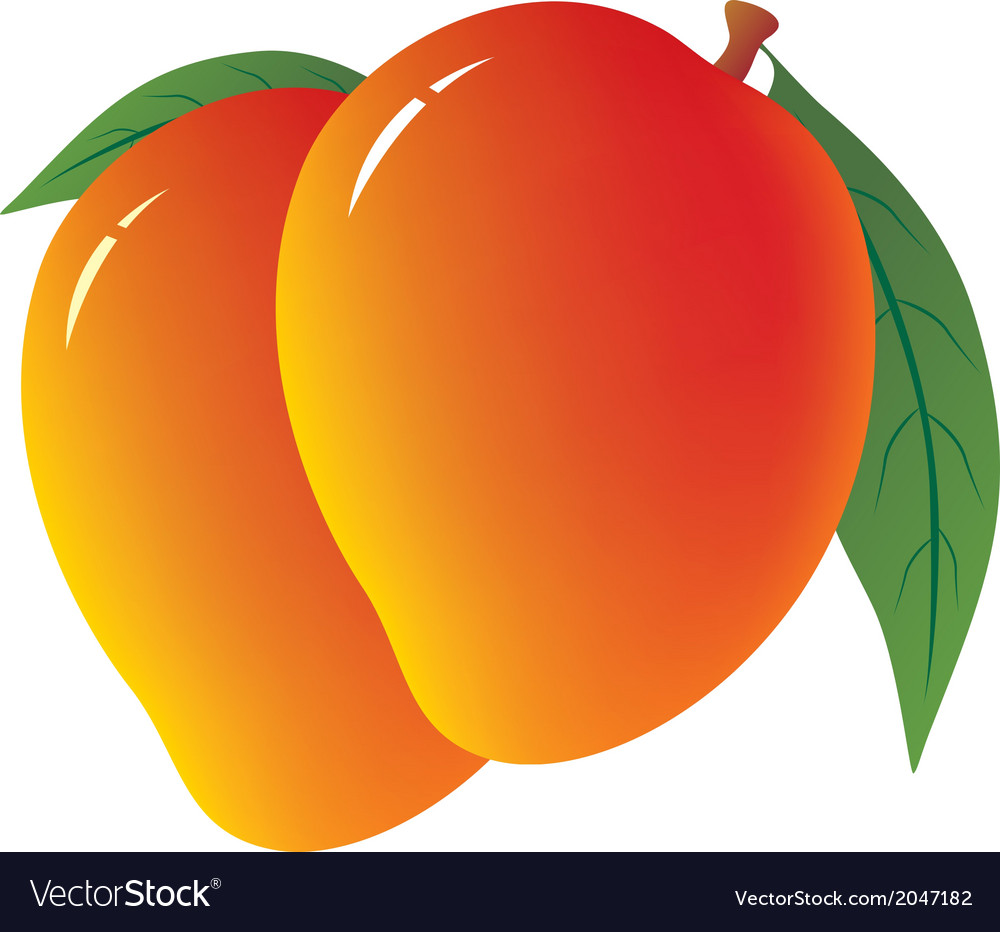 Mango on white background vector | Price: 1 Credit (USD $1)
