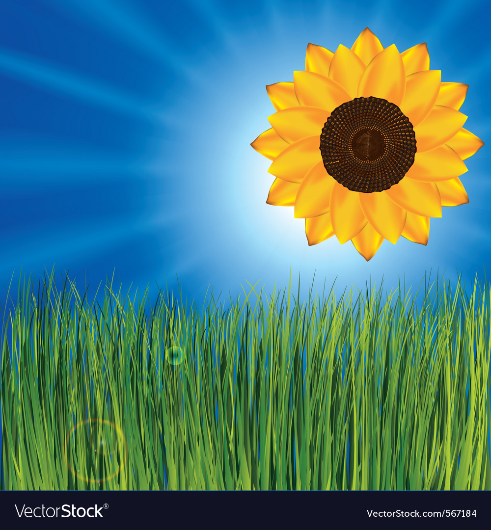 Grass with sunflower vector | Price: 1 Credit (USD $1)