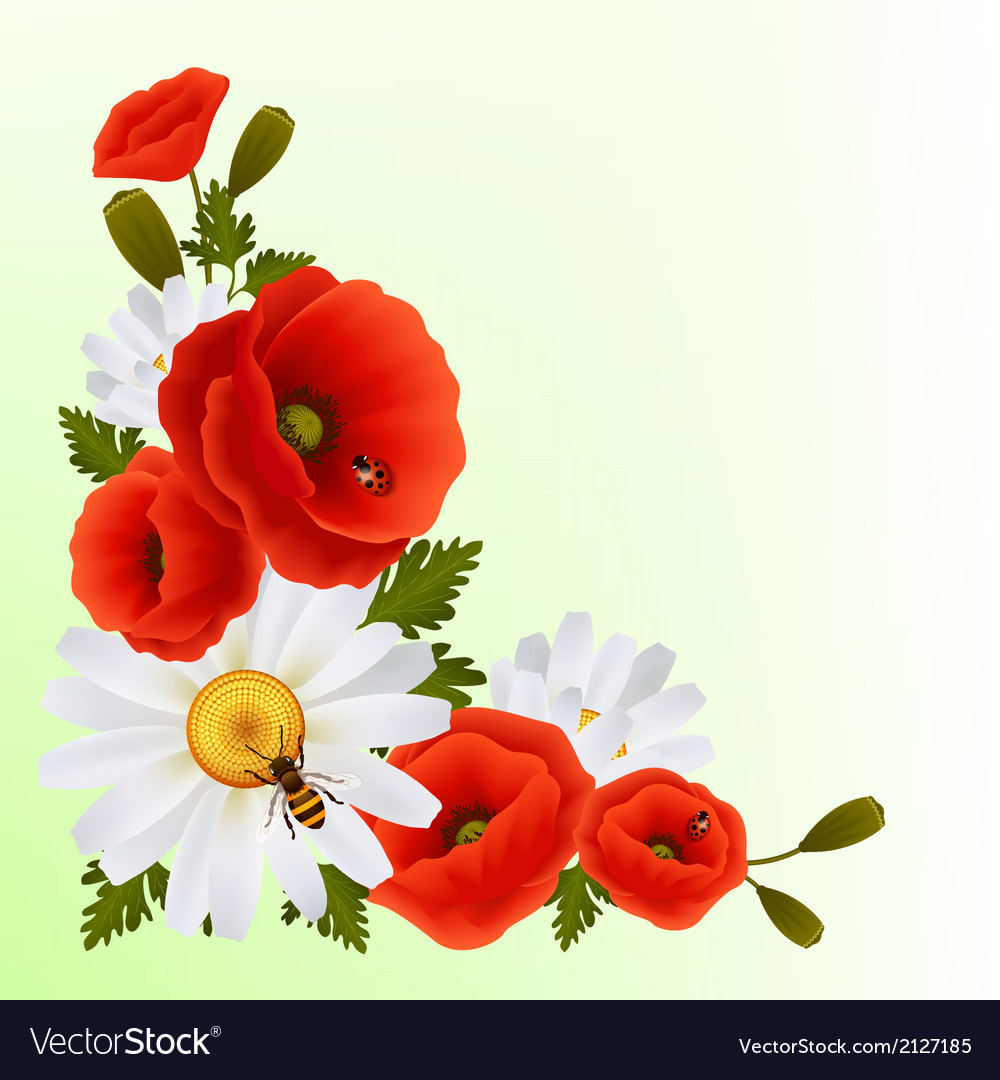Poppy daisy background vector | Price: 1 Credit (USD $1)