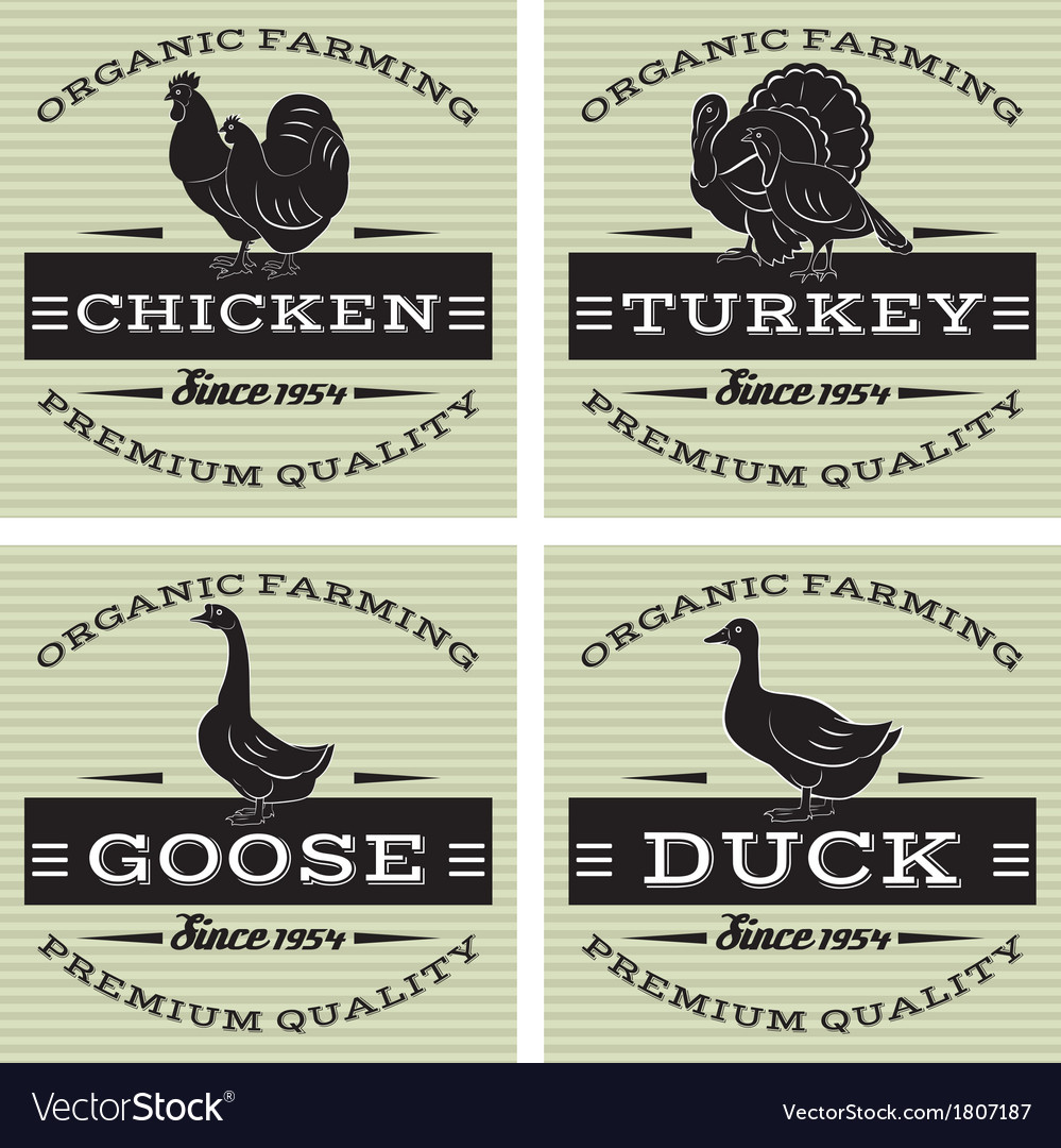 Poultry ikons on vintage background vector | Price: 1 Credit (USD $1)