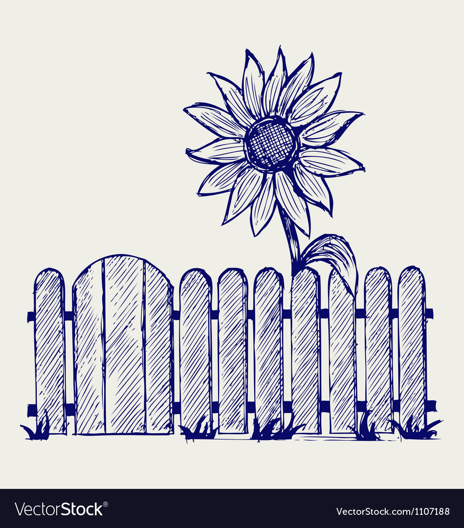Sunflower and fence vector | Price: 1 Credit (USD $1)