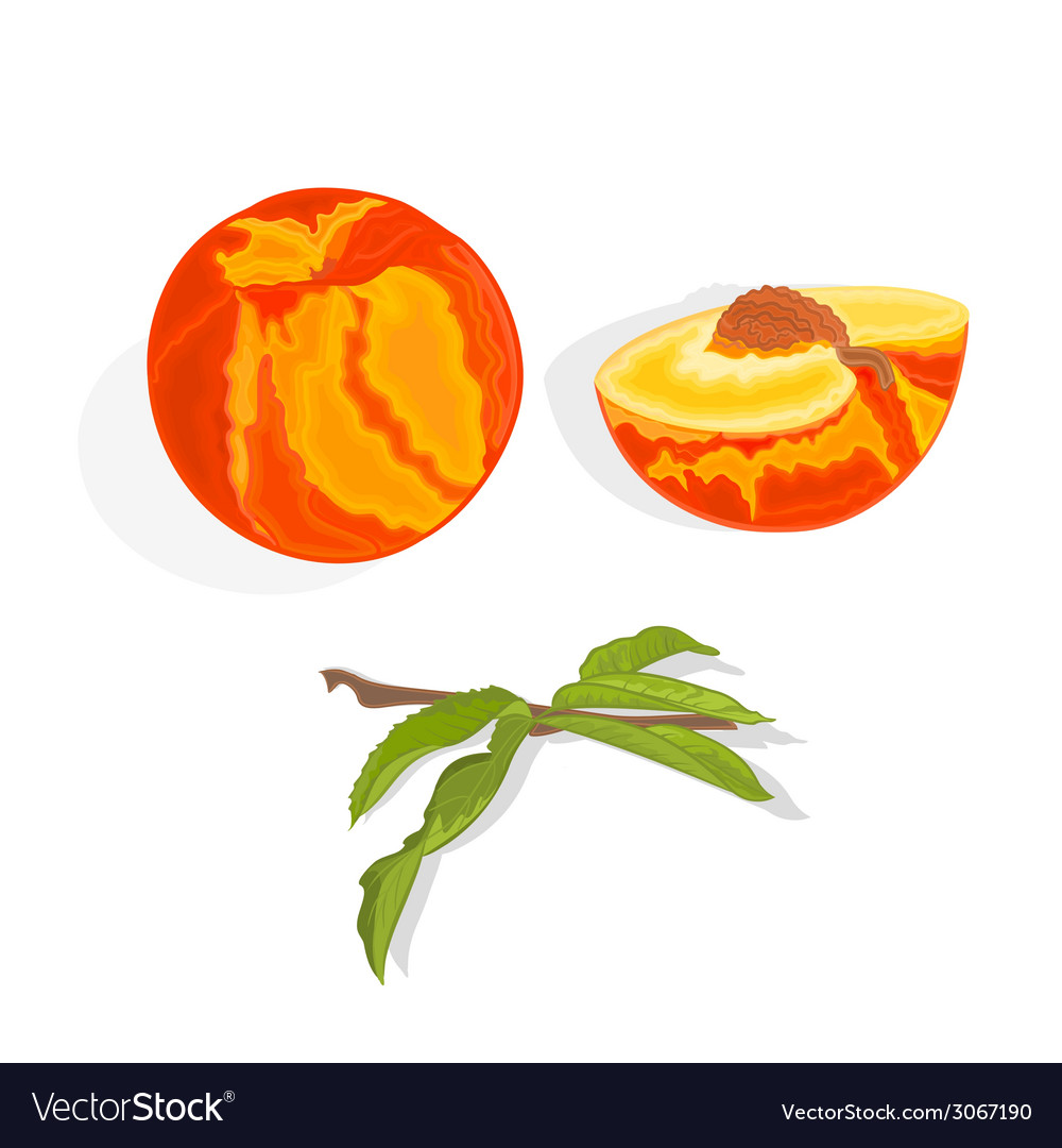 Peach with leaf slice and half with bone vector | Price: 1 Credit (USD $1)