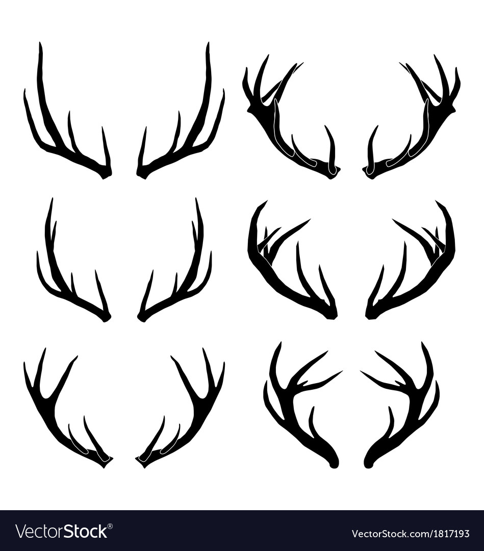 Deer horns collection vector | Price: 1 Credit (USD $1)