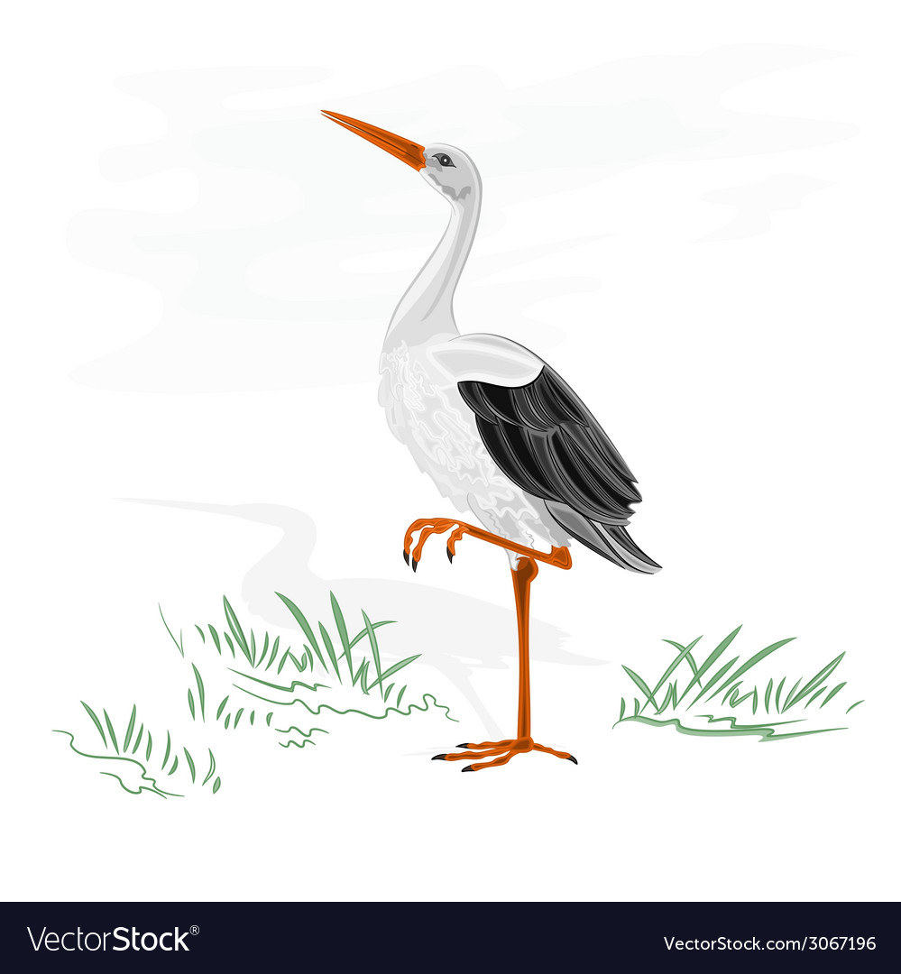 Stork white wild water bird vector | Price: 1 Credit (USD $1)