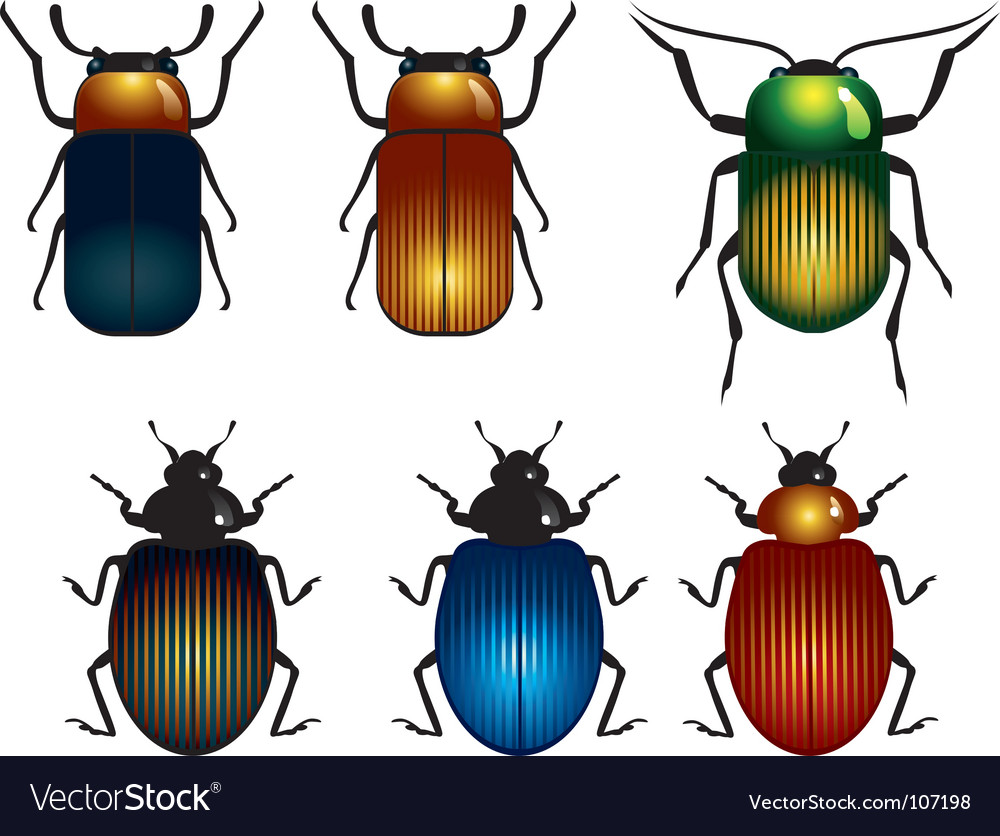 Timber beetle vector | Price: 1 Credit (USD $1)