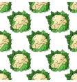 Fresh whole cauliflower seamless pattern vector