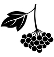 Viburnum berries vector