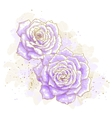 Violet roses on white background vector