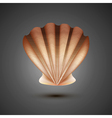 Sea shell on a gray background vector