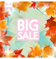 Card with maple leaves autumn sale vector