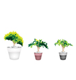 Three evergreen plant in terracotta flower pot vector