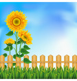 Background with a field of sunflowers and blue sky vector