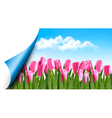 Spring background with pink tulips and a page vector