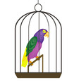 Beautiful tropical bird parrot in iron hutch vector